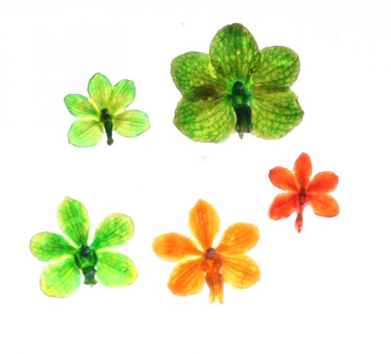 Real flowers and butterflies grown in Thailand -resin coated